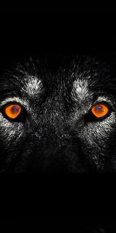 Angry Wolf Eyes Wallpapers #Angry #Wolf #Eyes #Wallpapers Wolf eyes Wolf wallpaper Eyes wallpaper