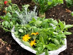 Mojito, Parsley, Herbs, Plants, Food, Essen, Herb, Meals, Plant
