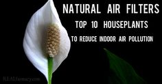 Did you know that indoor air is generally more polluted than outdoor air? That's right. Indoor air has a higher concentration of gases and particulates, du