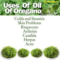 Radiant Health with doTERRA Essential Oils!: Essential Oils for Parasites and Some Great Uses for Oregano Oil.Always use a carrier when applying oregano. It is a hot oil. Healing Oils, Healing Herbs, Natural Healing, Au Natural, Holistic Healing, Natural Life, Natural Skin, Essential Oil Uses, Doterra Essential Oils