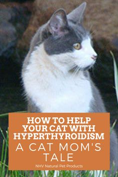 Larry the cat's success with NHV hyperthyroidism kit - Read more