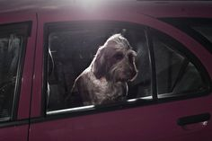 The Silence Of Dogs In Cars By Martin Usborne | Yatzer