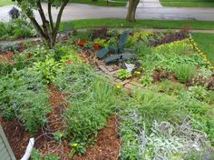 full vegetable gardens | This is my front lawn vegetable garden in my very traditional suburban ...