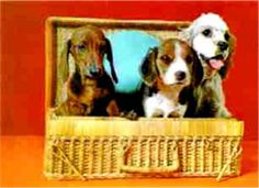 3D Lenticular Cute Dog Postcard 3 Doggy in Basket from Lantor Ltd., $2.50: After interlacing photos taken from multiple angels, a laminated, composite image can achieve the illusion of 3D with the help of a high-resolution lenticular lens. Here we have neat, cute retro pics of adorable doggies, ideal for grandma, collectors, kids, and hip,puppy -themed parties! Click here to purchase: http://www.lantorlimited.com/3D-Lenticular-THREE-DogS-IN-BASKET-p/tp-201-pc.htm