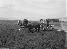 Better than before: Low-income farmers and Farm Security Administration Rural Rehabilitation clients in Sanpete County, Utah, badly needed an alfalfa duster. The equipment in this picture now belongs to the Axtell Alfalfa Duster Cooperative Association