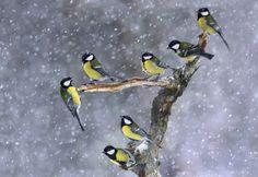 How New Birds Learn Old Tricks   Audubon Magazine