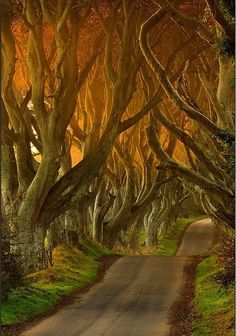 This beautiful avenue of beech trees was planted by the Stuart family in the eighteenth century.  It was intended as a compelling landscape feature to impress visitors as they approached the entrance to their home, Gracehill House.  Two centuries later, the trees remain a magnificent sight and have become known as the Dark Hedges. Northern Ireland.