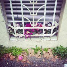 #window #flowers #grass #wall #leafs #litter #colors #white #green #purple #finestra #sbarre #fiori #erba #foglie #immondizia #colori #bianco #verde #fucsia #instagrammers #followme #instapic #instaphoto #instadaily #instashot #flowersofinstagram #instaflowers
