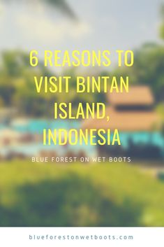 Thinking of escaping to Bintan? These six things to do in Bintan Island, Indonesia may just convince you to ditch the city for the weekend. Bintan Island, Stuff To Do, Things To Do, Blue Forest, Natural Wonders, Weekend Getaways, Southeast Asia, Singapore, 8 Days