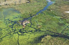 Aerial shot over the Okavango Delta - Botswana. #Africa #Travel #Safari #Delta
