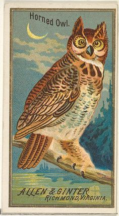 Horned Owl, from the Birds of America series (N4) for Allen & Ginter Cigarettes Brands
