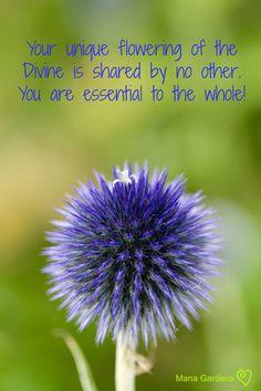 Dandelion, Words, Unique, Flowers, Plants, Gardens, Inspirational, Image, Dandelions