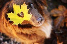 Ces portraits de chiens vous feront (re)tomber en amour avec l'automne