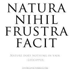 "Natura nihil frustra facit"" nature does nothing in vain -leu Latin Phrase Tattoos, Latin Tattoo, Latin Quotes, Words Quotes, Life Quotes, Latin Sayings, Tatuagem Em Latin, Laura Lee, Latin Language"