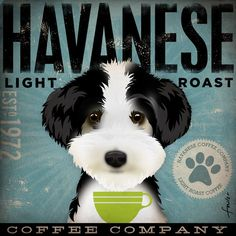 Havanese Coffee Company by stephen fowler