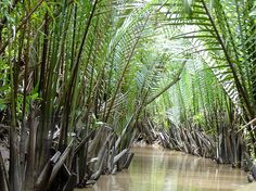 Jungle view from a river in Vietnam     Viettel IDC Colocation Dedicated Server Hosting VPS Domain  http://viettelidc.com.vn