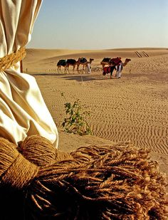 United Arab Emirates - The Caravan, Dubai