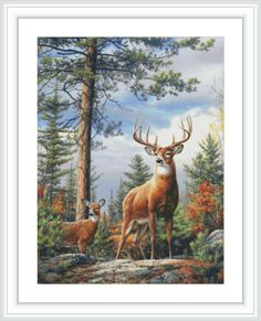 These 1000 piece Jigsaw Puzzles feature fine art inspired by nature! The Hautman Brothers have established themselves as Americas foremost family of wildlife artists. Hautman Brothers art has been Wildlife Paintings, Wildlife Art, Animal Paintings, Deer Paintings, Original Paintings, Deer Pictures, Deer Pics, Deer Art, Stag Deer
