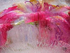 Flower Photography, Seed Pods, Berries, Frozen, Garden, Flowers, Image, Garten, Gardening
