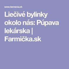 Liečivé bylinky okolo nás: Púpava lekárska   Farmička.sk