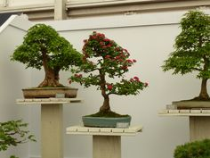 Stand Indoor Bonsai Tree Plants Chelsea Flower Show The Incredibles Home