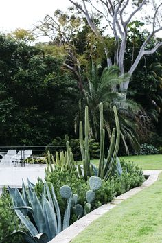 Inside The Vaucluse Home Of Australias Hospitality Kingpin Justin Hemmes Succulent Landscaping, Succulents Garden, Garden Landscaping, Landscaping Ideas, Outdoor Gardens, Indoor Outdoor, Outdoor Living, Small Gardens, Garden Spaces