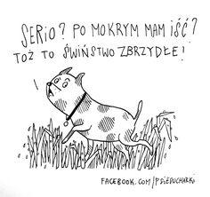 Psy, Humor, Funny, Dogs, Animals, Home Decor, Historia, Animales, Decoration Home