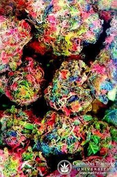 Repined From CTU  http://5280mosli.com -Organic Cannabis College- Top Shelf Marijuana- #OrganicCannabis