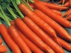 Top 4 Types Of Cancer Fighting Foods Carrot Vegetable, Swamp Milkweed, Carrot Seeds, Orange Interior, Cancer Fighting Foods, Landscaping Plants, Live Plants, Outdoor Plants, Flower Pots