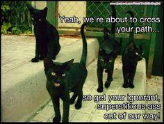 Here, sweet kitties!