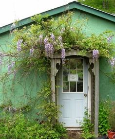Wisteria Draped over a Door From Words From The Mountains Blog