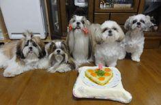 愛犬投稿:ファミリー 投稿者:しんママさん