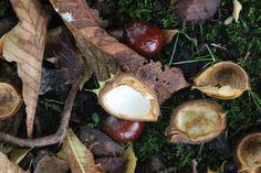 Zeit fürs Basteln mit Kastanien! #Herbst #Oktober