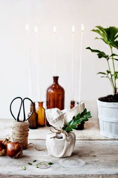 DIY | Fabric-Wrapped Paperwhite Bulbs