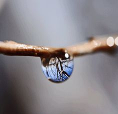 Spring Water Drop Photograph with Reflection - Macro Photograph by Smokinmudproductions (etsy)