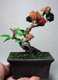 Shohin or Mame Bonsai, berry beautiful! Mame Bonsai, Bonsai Fruit Tree, Fruit Trees, Fruit Bushes, Fruit Flowers, Planting Flowers, Ikebana, Miniature Plants, Bonsai Garden