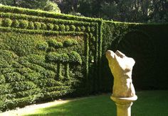 Relief hedge carving in the Turf Maze -Artist Gardener Mike Green and his work of art.