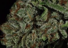 Agent Orange (AA) | 420 Family Dispensary | Add to Cart