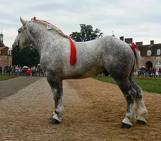 This looks like my old vaulting horse ❤️❤️