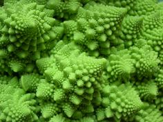 A fractal called Romanesco broccoli