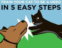 How To Train Your Cat To Be A Hero