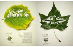 Every leaf traps Co2.. Cause and Effect: Visualizing Sustainability
