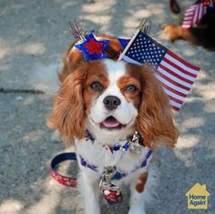 Teddy loves 4th of July.