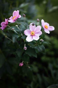 In my garden / MITT VITA HUS