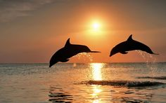 море закат: 22 тыс изображений найдено в Яндекс.Картинках