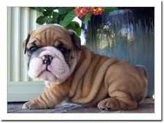 Big, Wrinkly Face