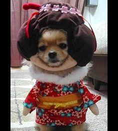 Tu veux costumer ton chien à l'Halloween? R'garde bien les 15 idées que j'ai pour toi.. - Images - Images - Cours Toutoune
