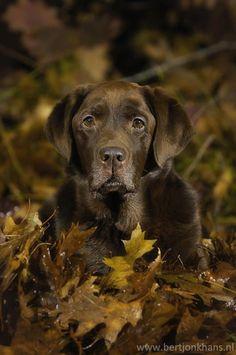 brown.quenalbertini: Autumnal doggy | My Pleasure