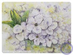 Kirschblüten Aquarell, 30 x 40 cm