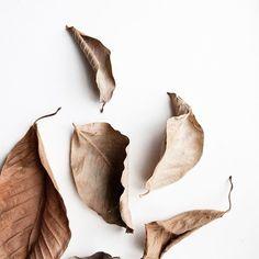 This week feels very Autumnal 🍂🍁🍄#sourceunknown